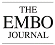 embo-journal